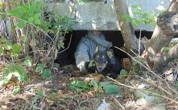 У прикарпатському містечку собака провалилася до підвалу закинутої будівлі