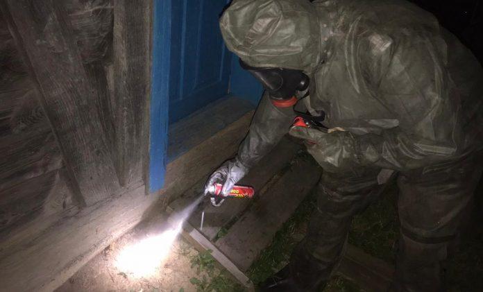 В передмісті Івано-Франківська агресивні шершні завдавали клопотів місцевим мешканцям