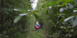 На Прикарпатті рятувальники розшукували жінку, яка пішла в ліс та не повернулася