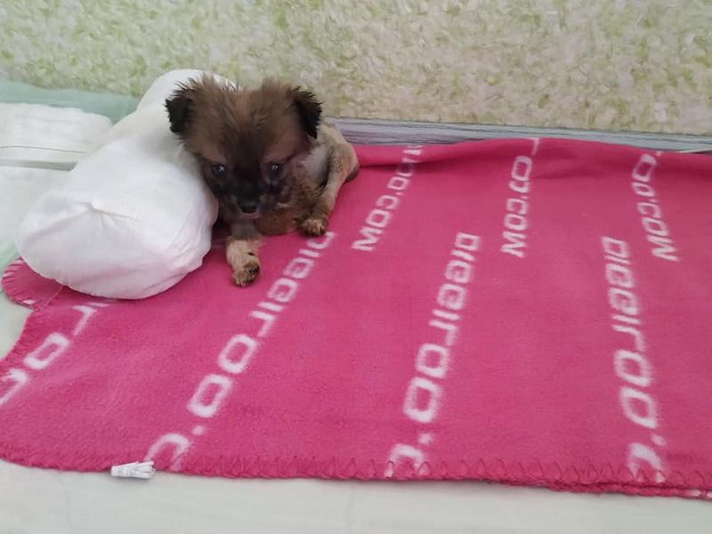 """Волонтери франківського """"Дому Сірка"""" прилаштували у добрі руки 675 тварин ФОТО"""