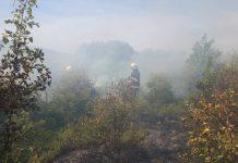 Вогонь знищив два гектари пшениці на Городенківщині ФОТО