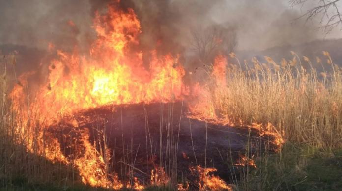 На Прикарпатті очікується пожежна небезпека