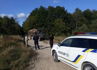 На Прикарпатті зупинили вантажівки із незаконно вирубаним лісом ФОТО