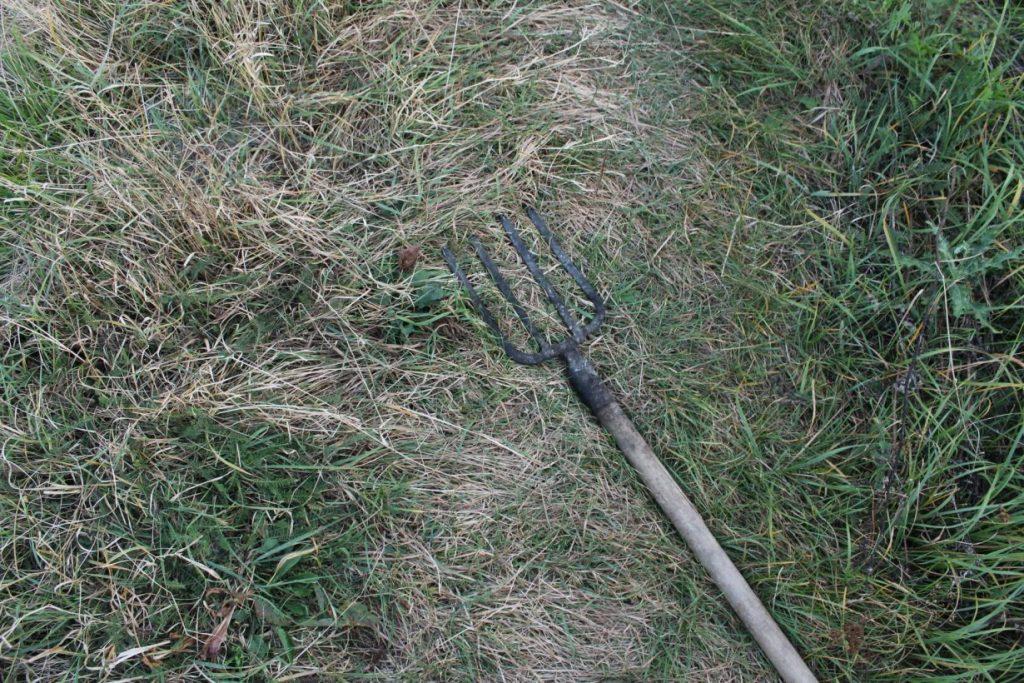 На Прикарпатті розшукують палійку трави, яка загубила вили