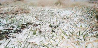Карпати притрусило снігом ФОТО та ВІДЕО