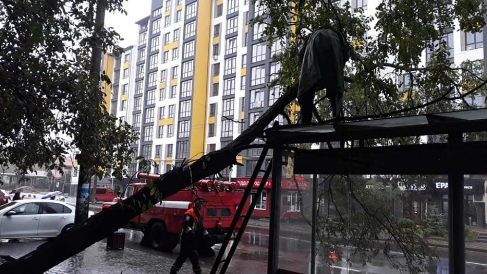 Сильний вітер у Франківську повалив дерево на зупинку ФОТО