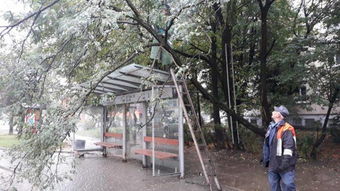 Сильний вітер у Франківську повалила дерево на зупинку ФОТО