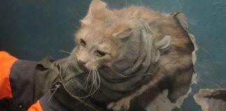 У Франківську з вентиляційної шахти багатоповерхівки рятували кота