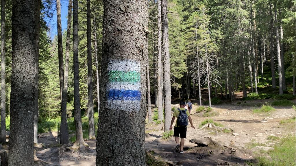 Краєвиди Карпат заворожують: всі тонкощі сходження на Говерлу та відпочинку в горах