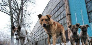 Благодійники та волонтери рятують безпритульних тварин від голоду та спраги ВІДЕО
