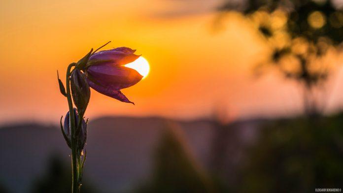 Відомий прикарпатський мандрівник зробив неймовірно красиві фотоспогади літа, що минуло