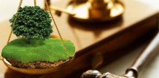 На Прикаратті незаконно передали в оренду 6 гектарів землі