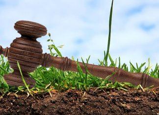 Одна з сільрад Тисмениччини незаконно надала в оренду землю вартістю майже 5 мільйонів