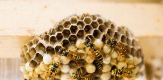У домі прикарпатців завелися агресивні комахи