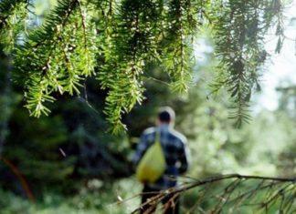 На Прикарпатті у лісі заблукали грибники з Львівщини