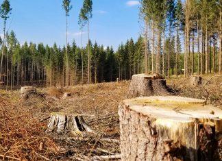 У передгір'ї Карпат зрубано половину лісів ВІДЕО