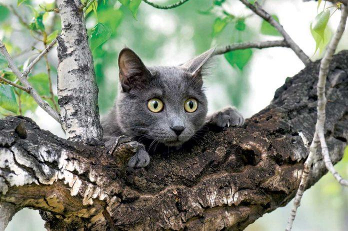 Франківським рятувальникам довелося знімати з дерева кошеня