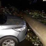 На Миколайчука шквальний вітер повалив дерево та стовб - рух ускладнений ФОТО