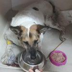 Кількість собак отруєних у Івано-Франківську зростає