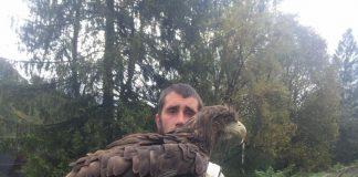 Попри заборону, в курортному Яремче фото-підприємці продовжують знущатись над дикими птахами ФОТО