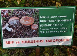 У Галицькому нацпарку відвідувачі нищать рідкісні гриби, що занесені до Червоної книги України