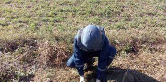 Прикарпатці на власному городі виявили боєприпаси