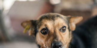 Винагорода 15 тисяч гривень: у Франківську розшукують невідомих, які труять собак