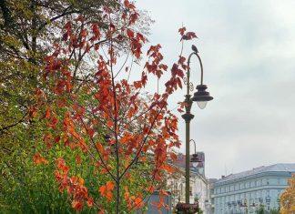 У центрі Франківська висаджують молоді дерева