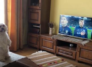 Мережу підірвало зворушливе відео, на якому собака слухає Гімн України