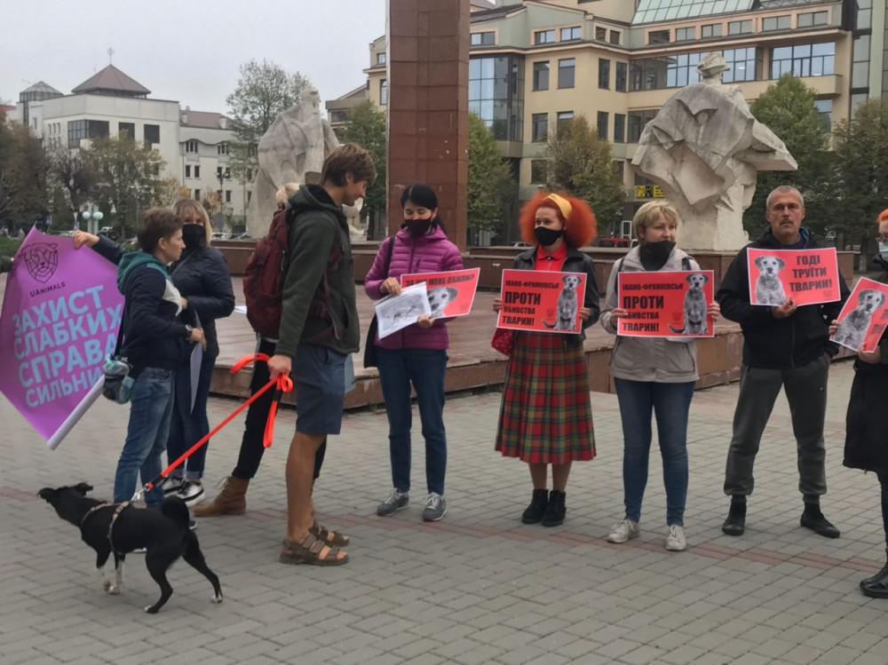 Обурені франківці під будівлею ОДА вимагають знайти винних у масовому отруєнні собак ФОТО