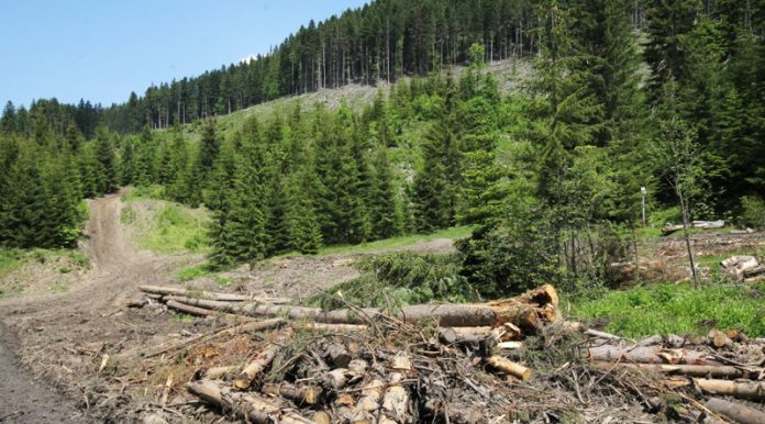 Прикарпатці сплатили більше 38 мільйонів за користування лісом