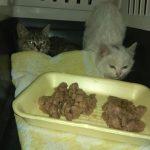 Небайдужі франківчани врятували кошенят, яких комунальники хотіли закопати  живцем
