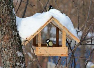 Прикарпатців просять не забувати годувати птахів