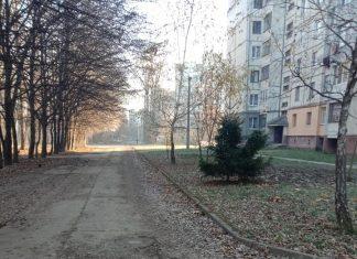 Франківці просять комунальників нарешті прибрати гниле листя біля парку ФОТО