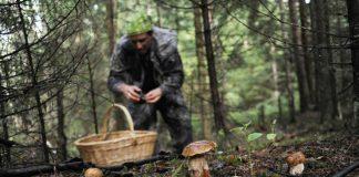 У лісовому масиві на Долинщині заблукав грибник