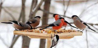 Жителів Франківщини запрошують долучитися до акції «Нагодуй птахів взимку»