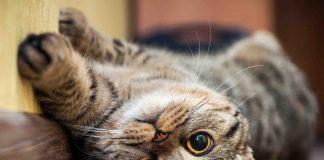 Прикарпатські надзвичайники рятували котів і собак