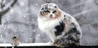 На Прикарпаття йде похолодання, прогнозують мокрий сніг