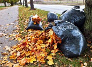 Чому у Франківську опале листя замість звалища везуть на кладовище? ВІДЕО