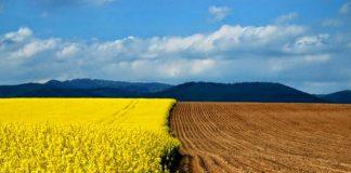 На Прикарпатті фтовариство зобов'язали повернути громаді села 8 гектарів землі