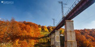 Ужоцький перевал: якою мальовничою може бути подорож залізницею в Карпатах ВІДЕО