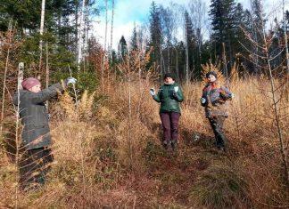 На Прикарпатті працівники лісового господарства захистили молоді дерева від диких тварин