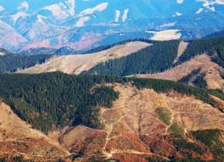 Повені в Україні пов'язані з вирубкою Карпат, – експерт
