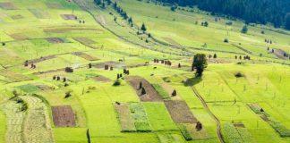 Прокуратура повернула у власність Академії аграрних наук більше 700 гектарів землі