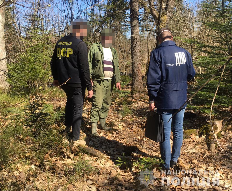Прикарпатського лісничого судили через одержання хабара за зрубані ялинки -  PRAVDA.IF.UA: Новини твого міста