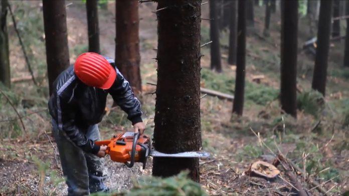 """На Прикапатті чоловік хотів """"відмазатися"""" 100 доларами за незаконну рубку  лісу - PRAVDA.IF.UA: Новини твого міста"""